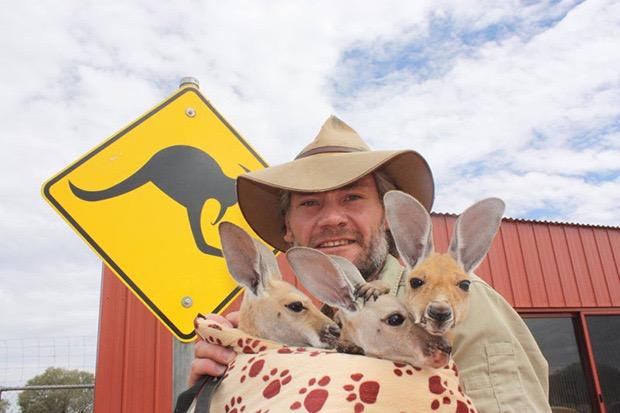 kangaroo-sanctuary-slice-springs-13