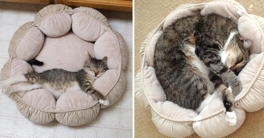 kittens-then-now