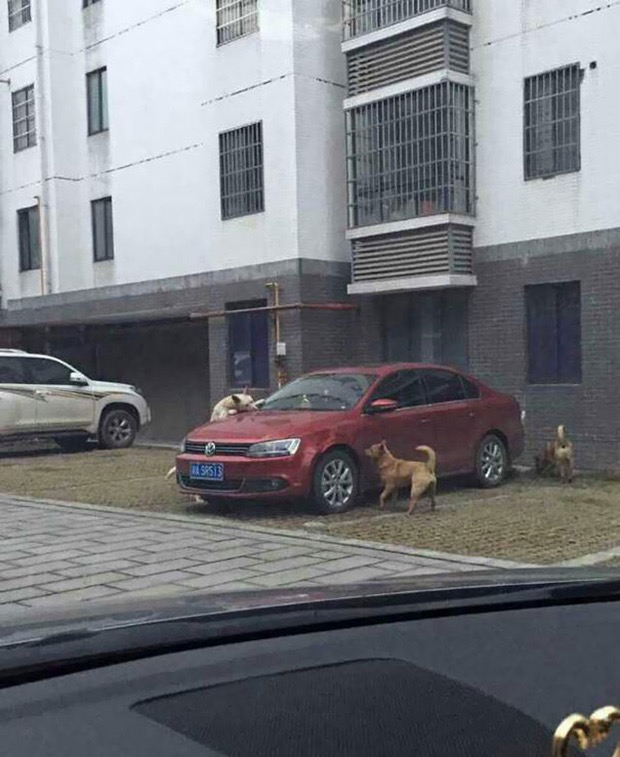 stray-dog-returns-for-revenge-3