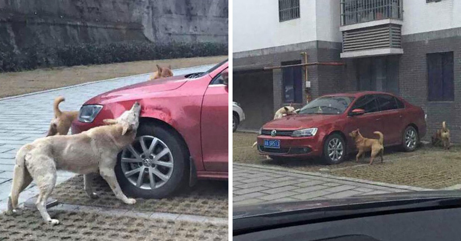 stray-dog-returns-for-revenge