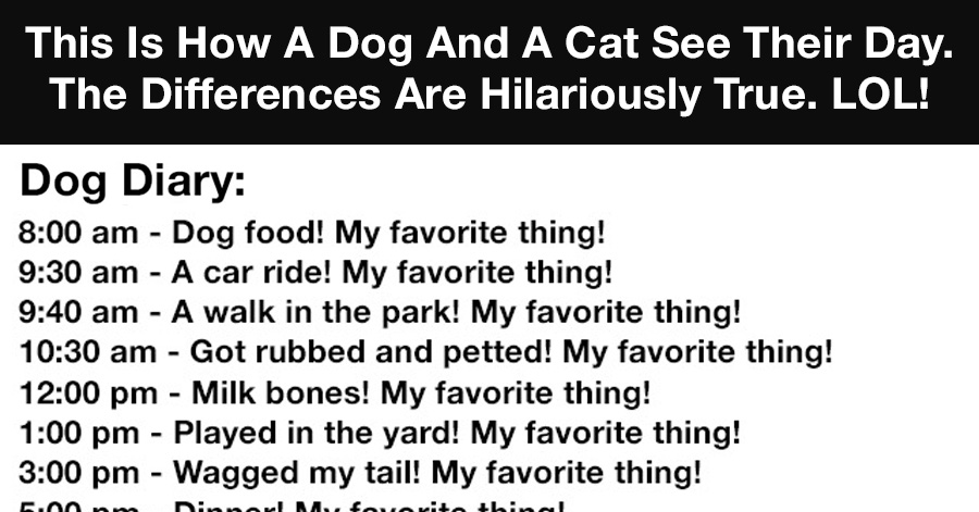 Diary Of A Cat Diary Of A Dog
