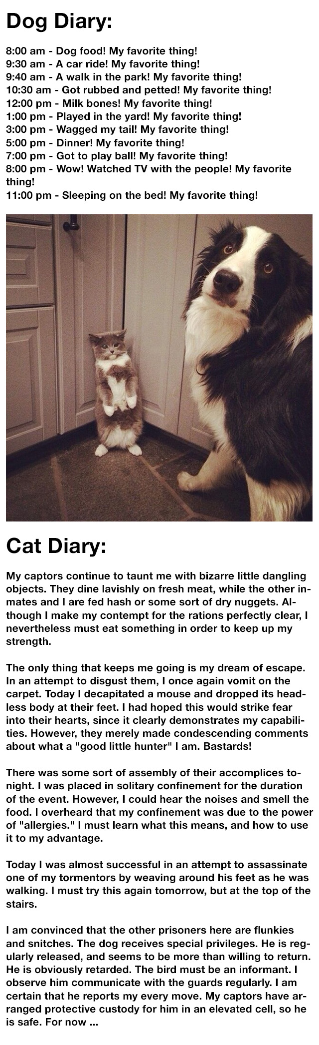 dog-cat-logic
