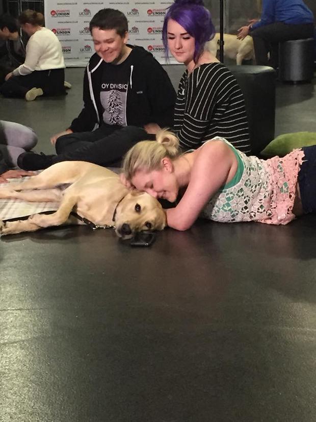 puppy-room-1