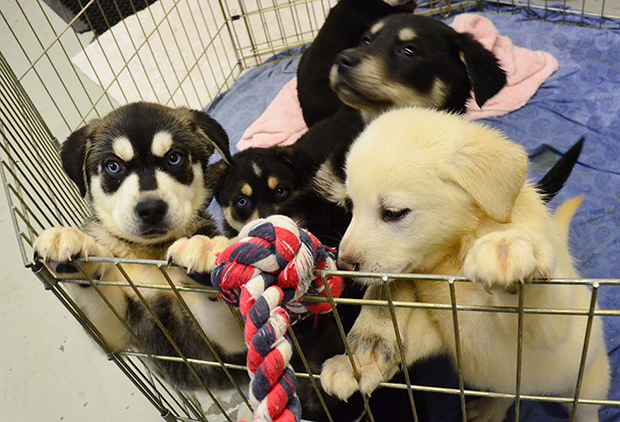 puppy-room-2