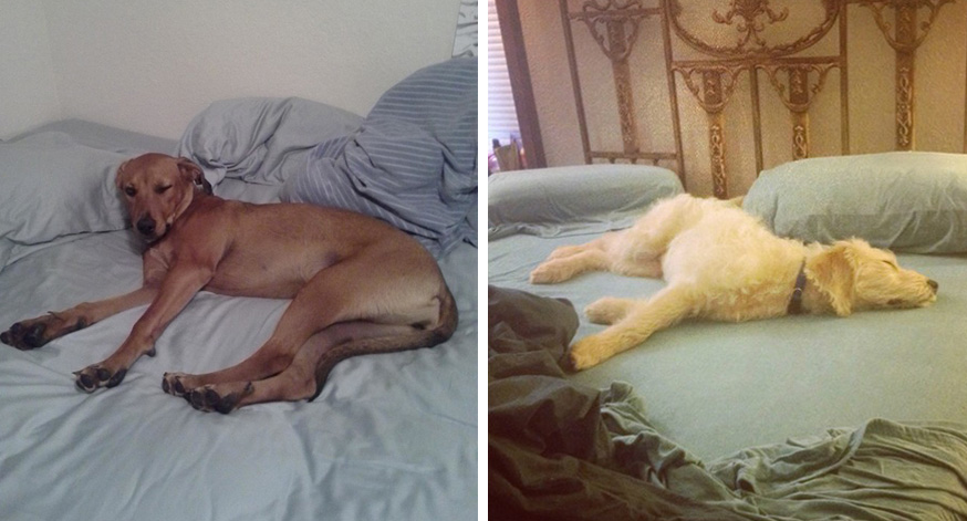 dogs-sleep-on-the-bed