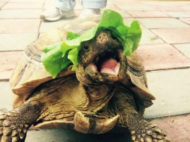 30 very happy animals that will make your day much better