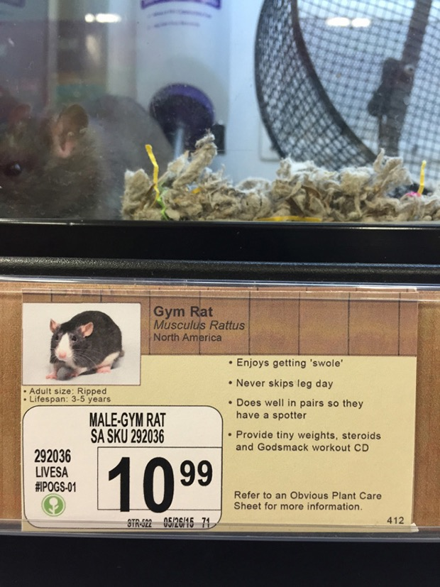 prank-animal-pet-store-2