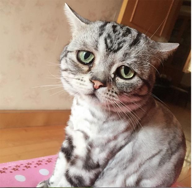 saddest-cat-in-the-world-10