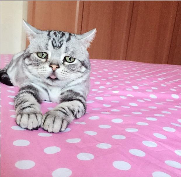 saddest-cat-in-the-world-11