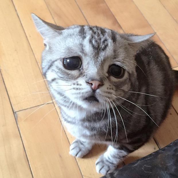 saddest-cat-in-the-world-3