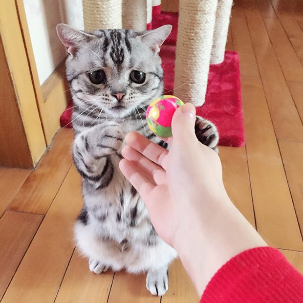 saddest-cat-in-the-world-4