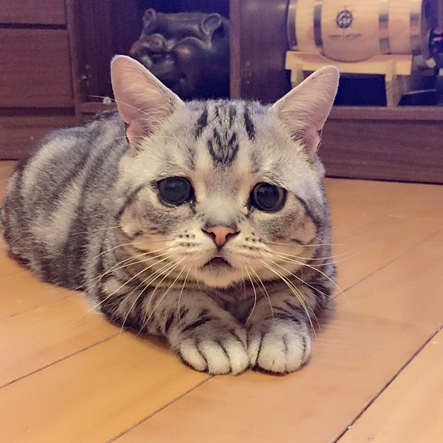 saddest-cat-in-the-world-5