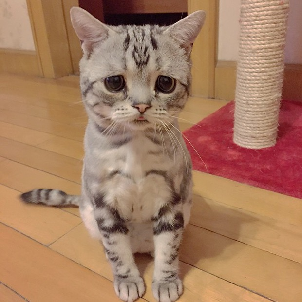 saddest-cat-in-the-world-6