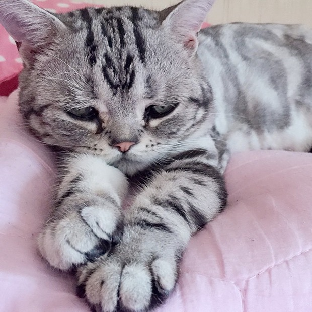 saddest-cat-in-the-world-7