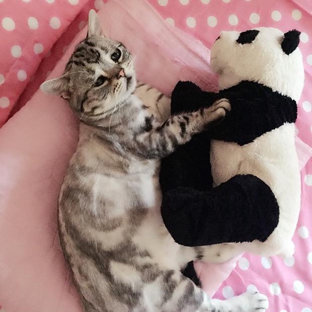 saddest-cat-in-the-world-8