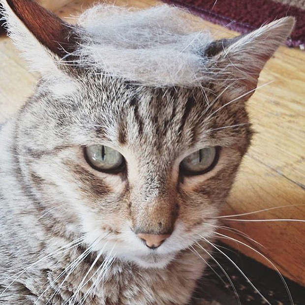 cat-hairstyle-11