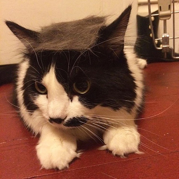 cat-hairstyle-15