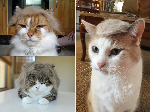 cat-hairstyle-3