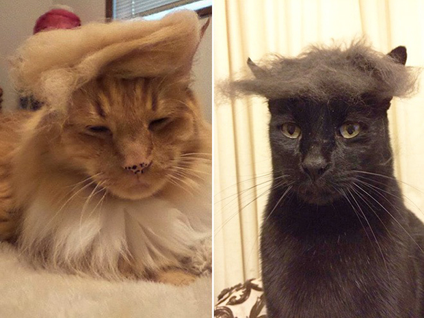 cat-hairstyle-9