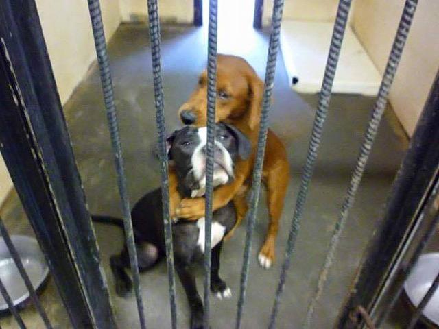 dog-hug-saves-friend-1