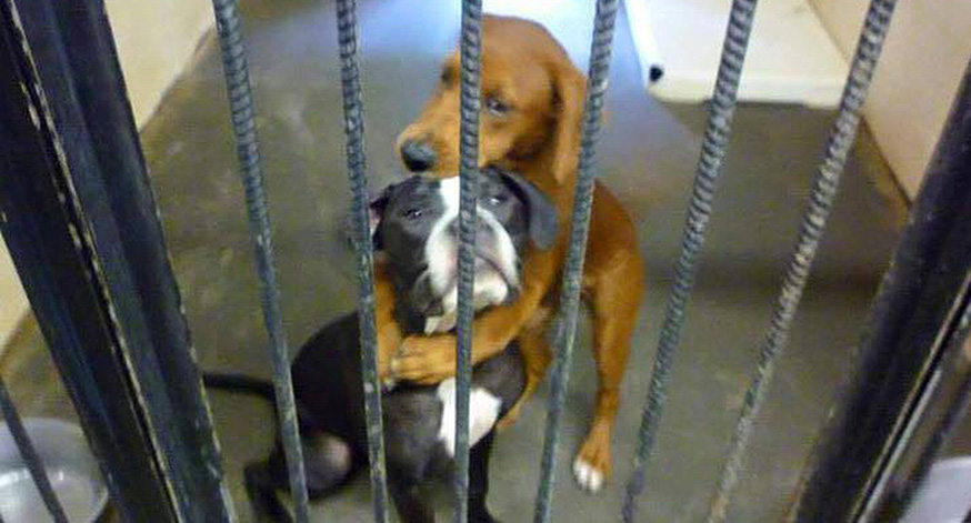Shelter Dog Saves Best Friend Hours Before Euthanasia After Hug Goes Viral