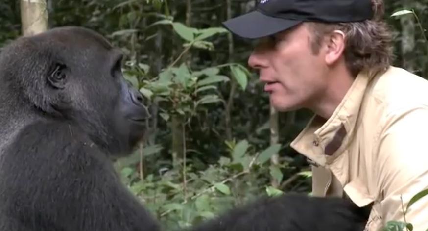 man-and-gorilla