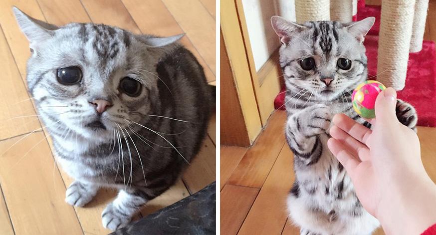meet-luhu-sad-cat
