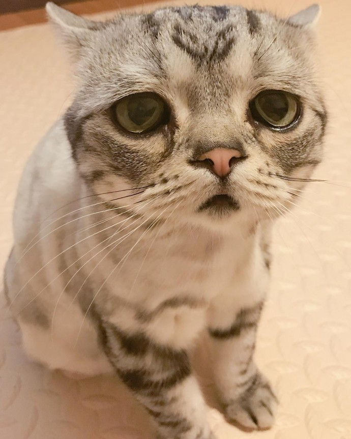Meet Luhu The Adorable Sad Cat The Internet Is Falling In