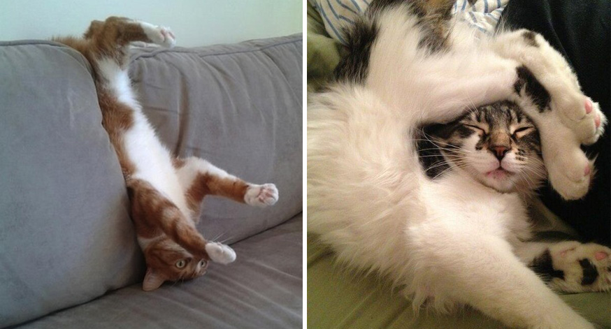 Hilarious Cats Who Totally Forgot How To Cat - 27 cats forgot how to cat