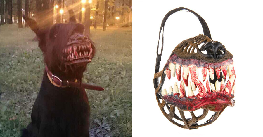 a-muzzle-for-your-dog-to-werewolf