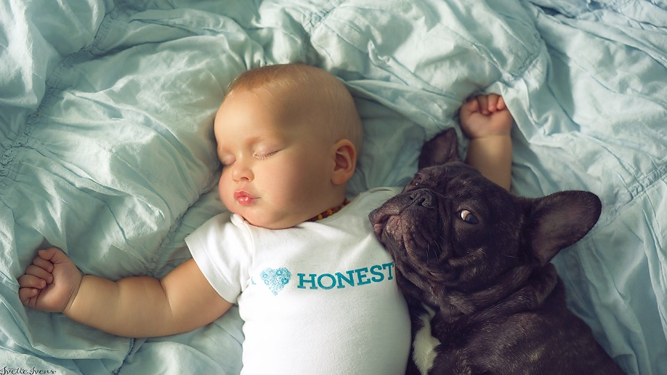 ivette-ivens-baby-bulldog-1