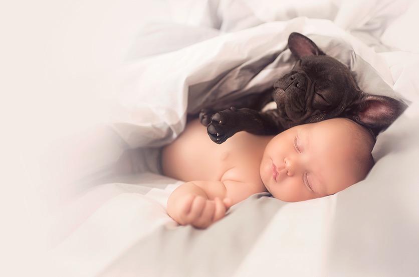 ivette-ivens-baby-bulldog-3