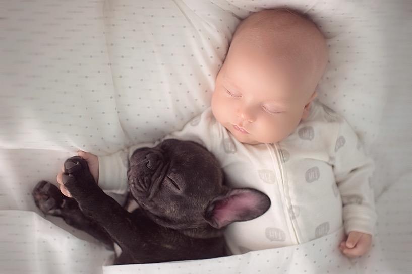 ivette-ivens-baby-bulldog-5