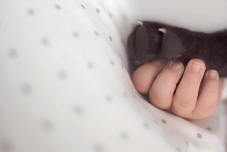 ivette-ivens-baby-bulldog-6