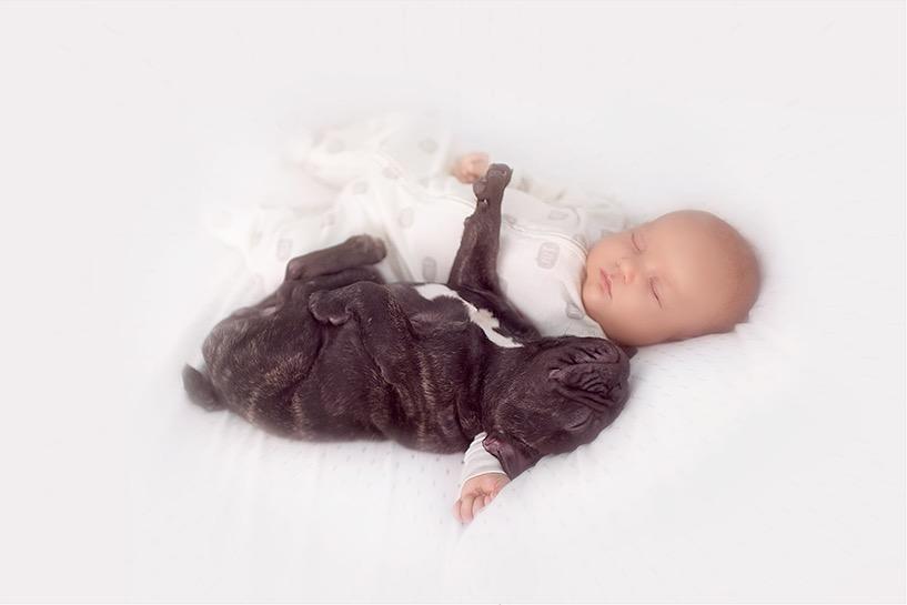 ivette-ivens-baby-bulldog-7
