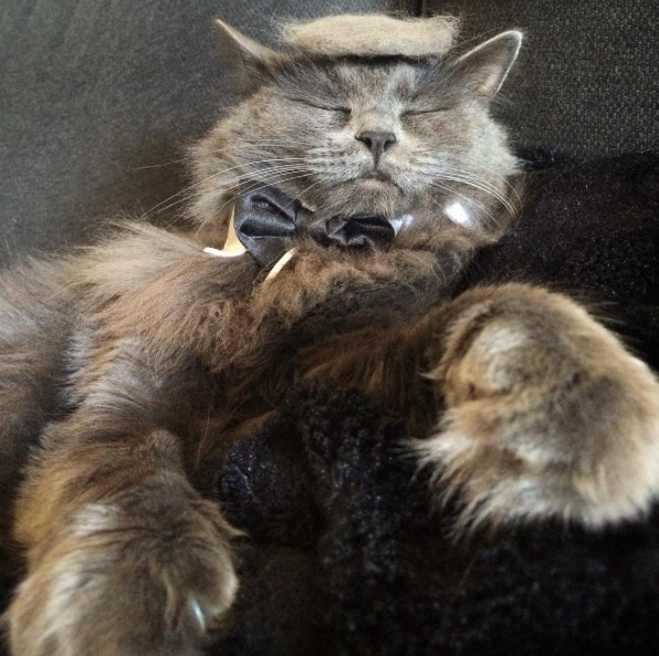 18 Hilarious Photos Of Cats Looking Like Donald Trump. #5 Is Just Purrfect, LOL!