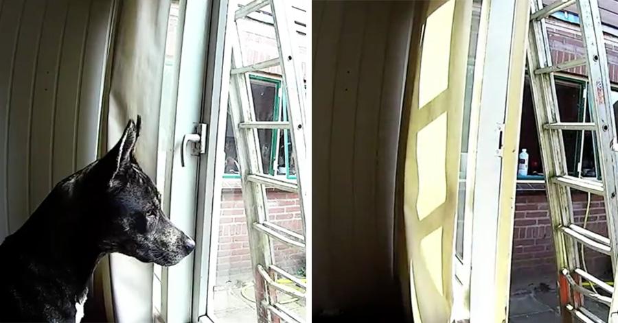 dog-escape-master