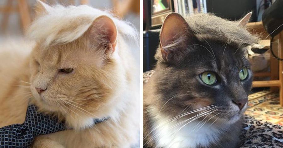 donald-trump-cats