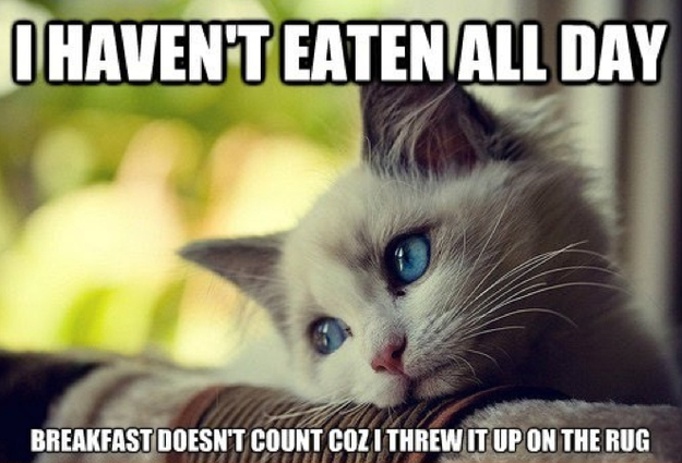 18 Hilarious Struggles Only First World Cats Will Understand. #7 Killed Me!