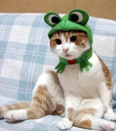 25 Halloween Costumes For Cats