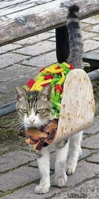 26 Hilariously Creative Halloween Costumes For Cats