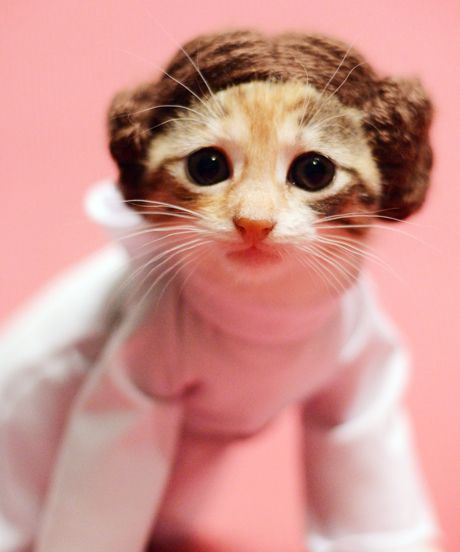 via refinery29.com & 26 Hilariously Creative Halloween Costumes For Cats