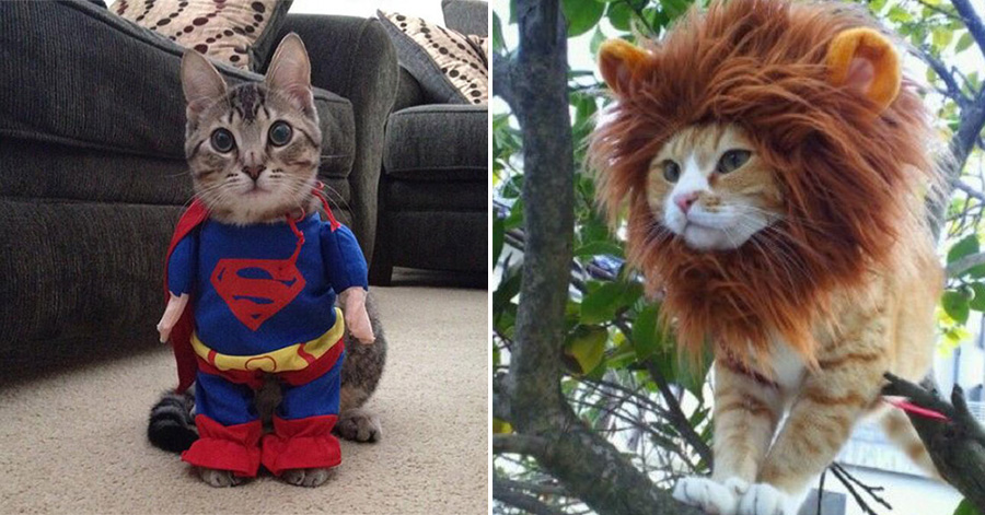 & 26 Hilariously Creative Halloween Costumes For Cats