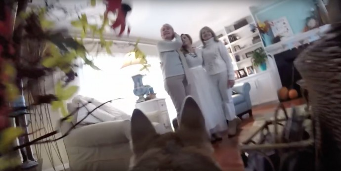 Couple Let Their Dog Film Their Snowy Wedding Day And The Result Was Magical