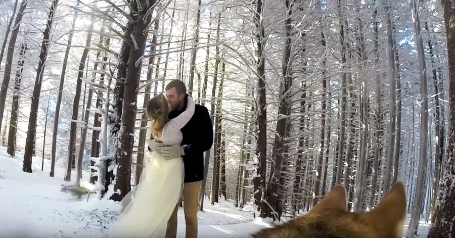 dog-video-wedding
