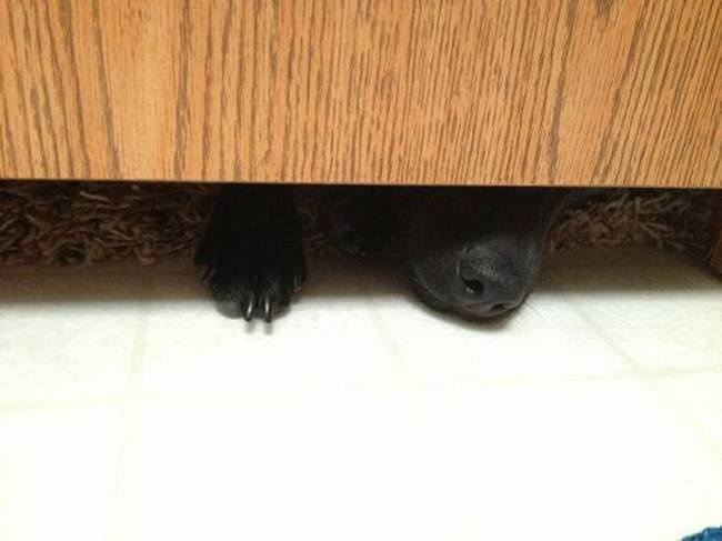 26 Pets Who Couldn't Care Less About Your Privacy, Especially The Last One.