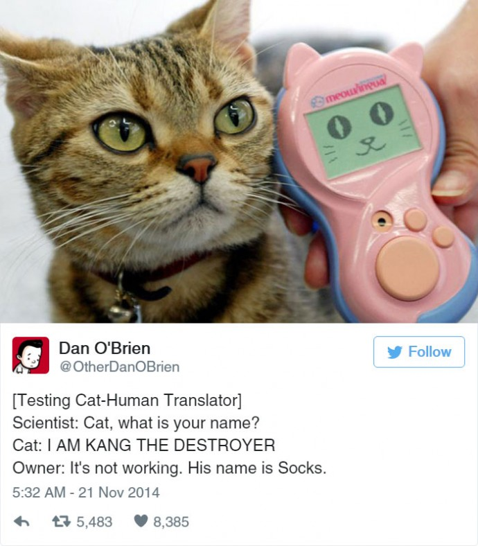 Hilarious tweets life with cats