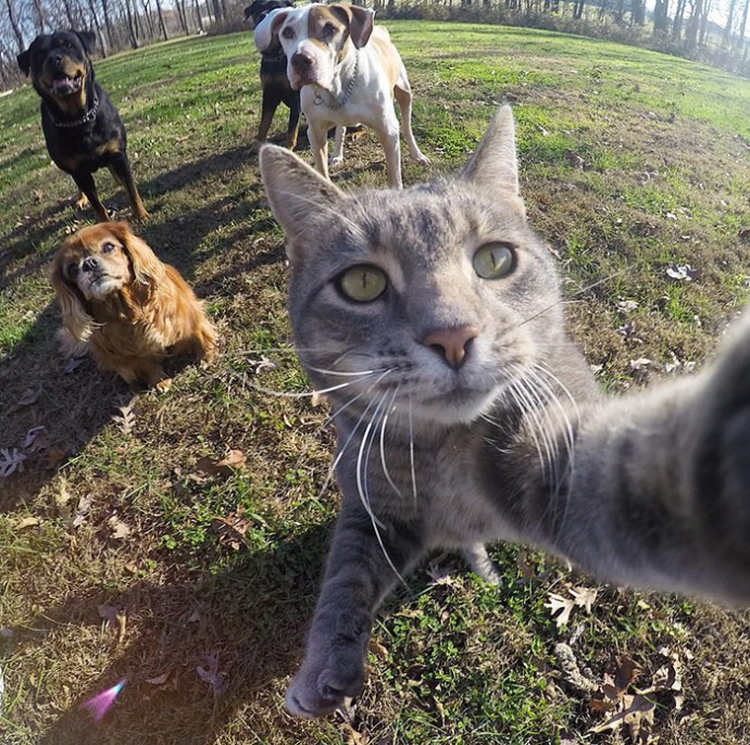 Meet Manny, The Cat Who Takes Better Selfies Than You