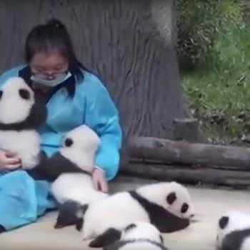 panda-hugger