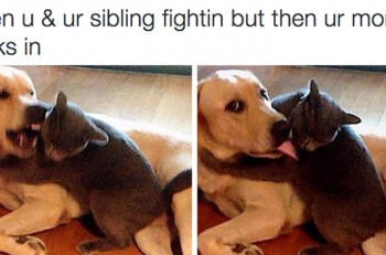 sibling-struggles